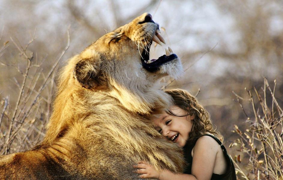 Lion 3012515 1920